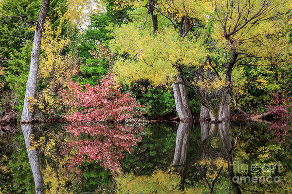 Photograph - A Small Hidden Pond In Fall Color In Oklahoma City by Richard Smith