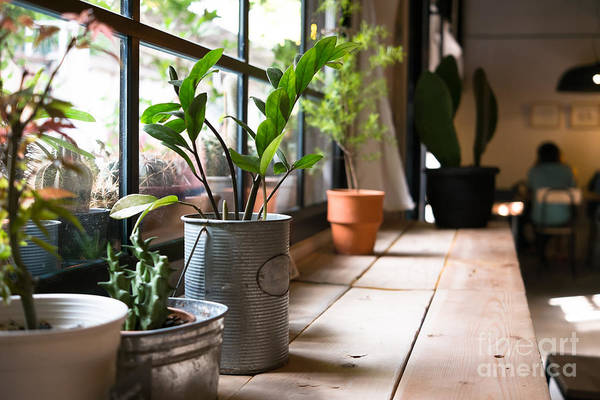 Wall Art - Photograph - A Small Plant Pot Displayed In The by Imnoom
