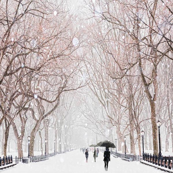 Wall Art - Digital Art - A Snowy Lane by Tim Palmer