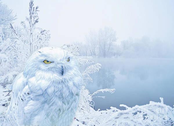 Digital Art - A Snowy Winter by Brian Tarr