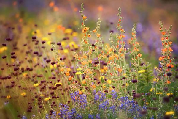 Wall Art - Photograph - A Sonoran Desert Spring Bouquet  by Saija Lehtonen