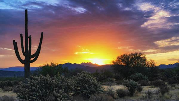 Wall Art - Photograph - A Sonoran Morning Is Calling  by Saija Lehtonen