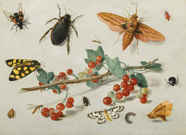 Painting - A Sprig Of Redcurrants With An Elephant Hawk Moth, A Ladybird, A Millipede And Other Insects by Jan van Kessel the Elder