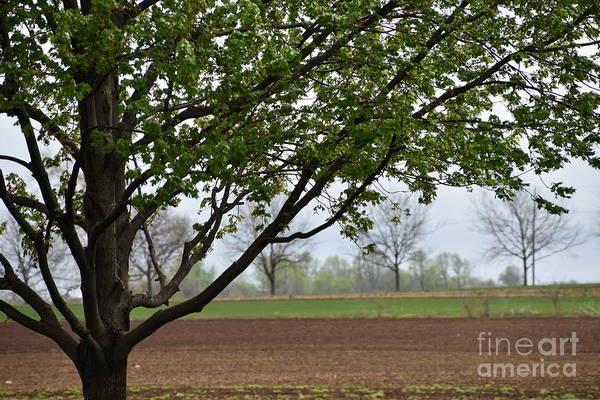 Photograph - A Spring Farm View by Christine Clark