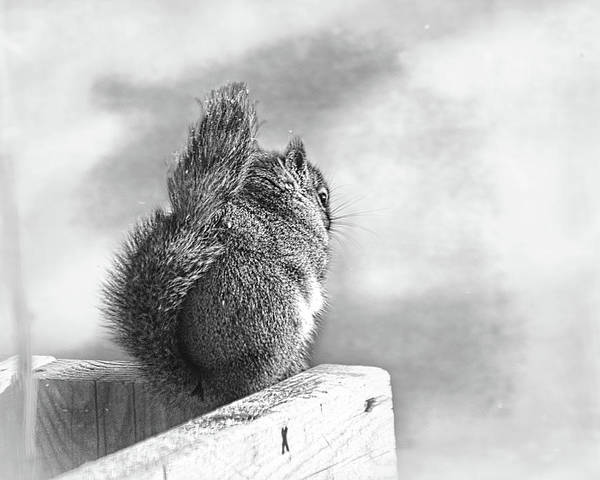 Wall Art - Photograph - A Squirrells Tale by Susan Capuano