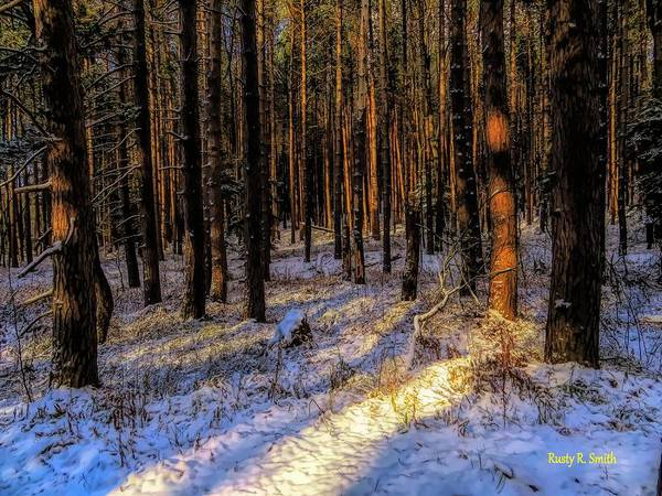 Digital Art - A Stand Of Pines Reflecting Late Afternoon Sun. by Rusty R Smith