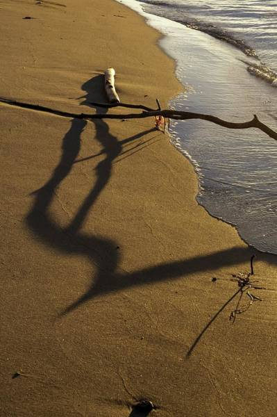 Wall Art - Photograph - A Strand Stranded by Tom Trimbath