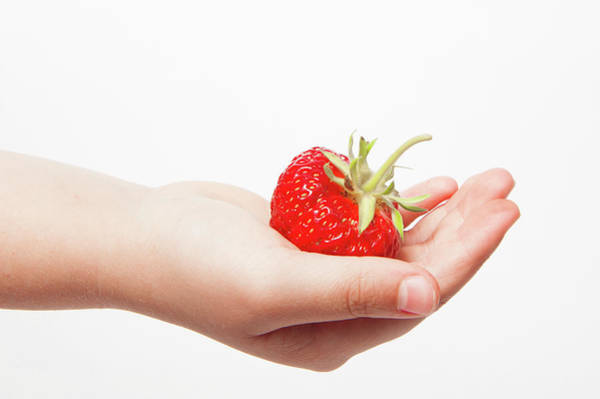 Photograph - A Strawberry In Hand by Helen Northcott