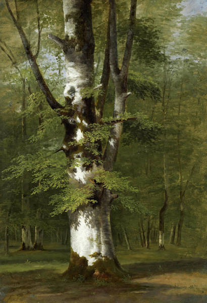 Wall Art - Painting - A Study Of A Tree by Achille Etna Michallon