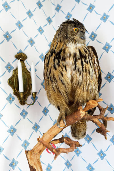 Home Interior Photograph - A Stuffed Owl by Per Magnus Persson