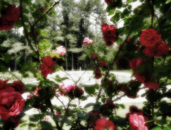 Wall Art - Digital Art - A Summer At Yaddo Xiii by Tina Baxter