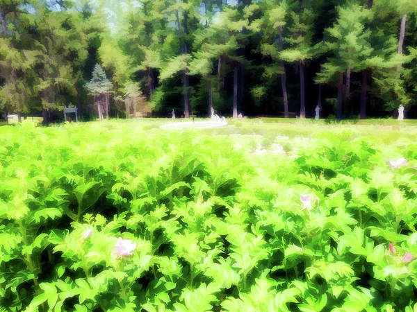 Wall Art - Digital Art - A Summer At Yaddo Xiv by Tina Baxter