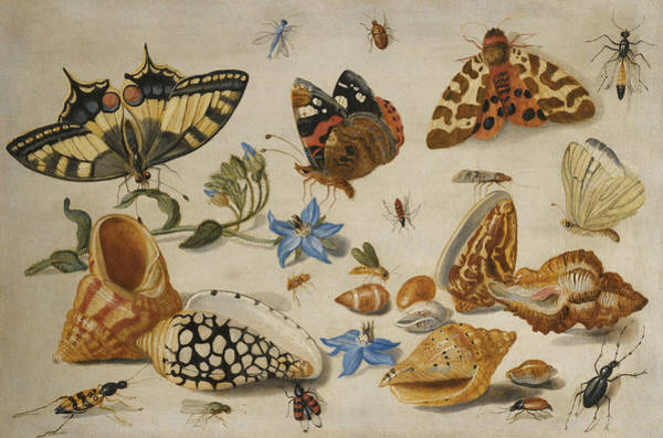 Wall Art - Painting - A Swallowtail, A Red Admiral And Other Insects With Shells And A Sprig Of Borage  by Jan van Kessel the Elder