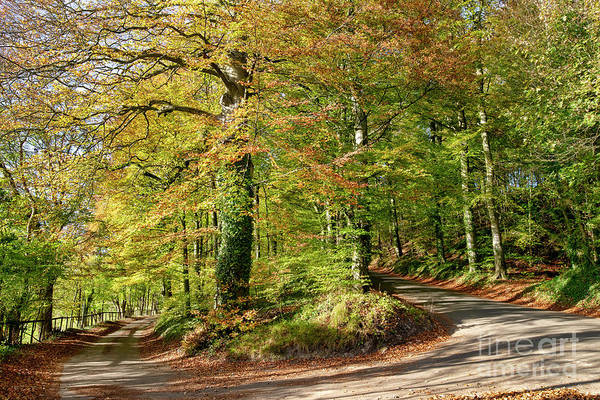 Photograph - A Taste Of Autumn by Tim Gainey