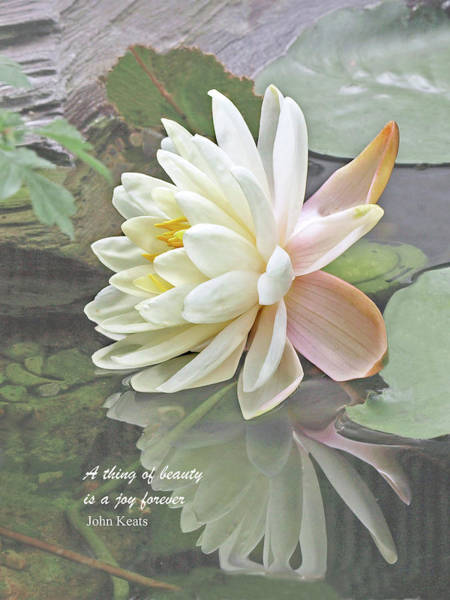Water Lillies Photograph - A Thing Of Beauty Is A Joy Forever by Gill Billington