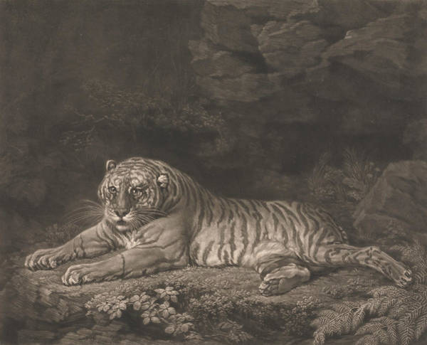 Relief - A Tigress by John Dixon
