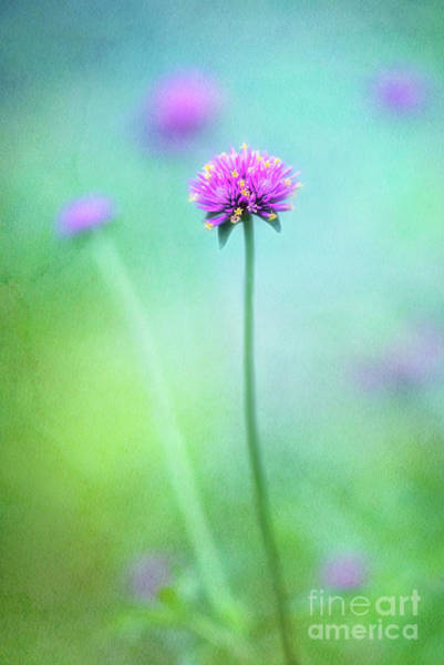 Wall Art - Photograph - A Tiny Charmer In Hot Pink by Anita Pollak