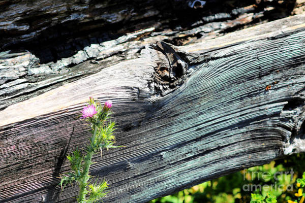 Wall Art - Photograph - A Touch Of Pink by Diann Fisher