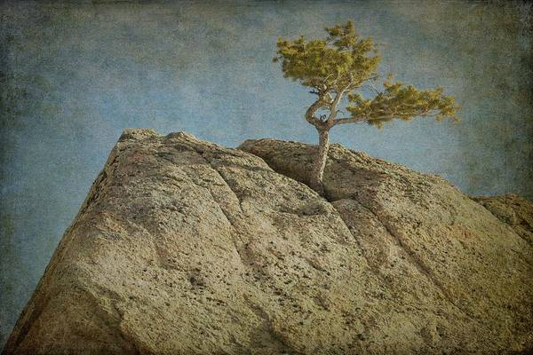 Photograph - A Tree In A Rock by Guy Whiteley