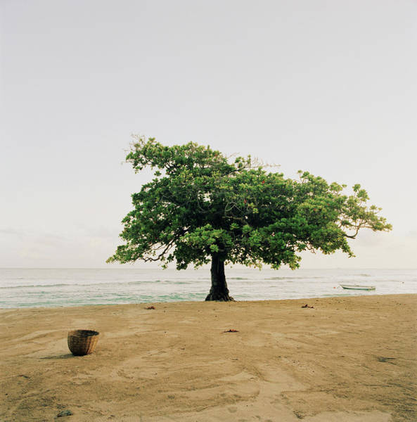 Greater Antilles Photograph - A Tree On The Beach At Petit-goave by Cultura Exclusive/philip Lee Harvey