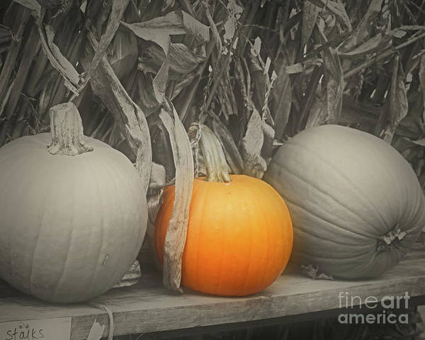 Photograph - A Trio Of Pumpkins by Smilin Eyes  Treasures
