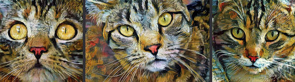 Mixed Media - A Trio Of Tabby Cats by Peggy Collins