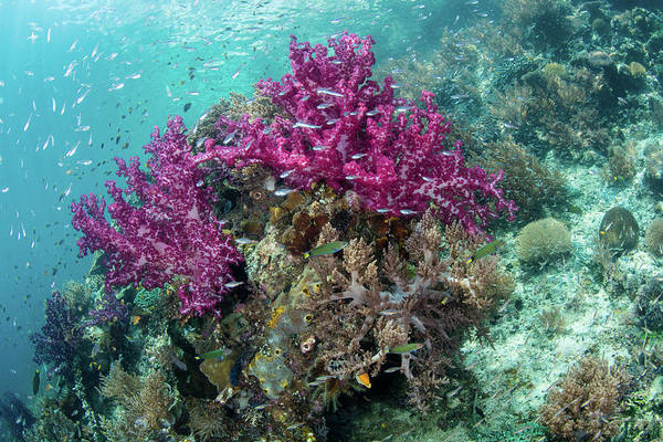 Wall Art - Photograph - A Vibrant Coral Reef Thrives by Ethan Daniels