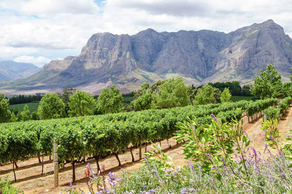 Photograph - A View At Delaire Graff Wine Estate by Rob Huntley