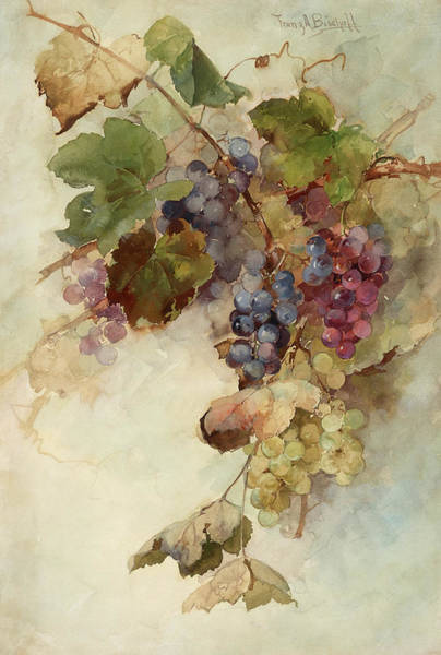 Wall Art - Painting - A Vine Of Grapes, 1910 by Franz Arthur Bischoff