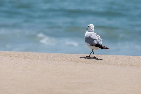 Photograph - A Walk In The Sand by Dan Urban