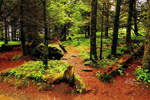 Photograph - A Walk In The Woods by Meta Gatschenberger