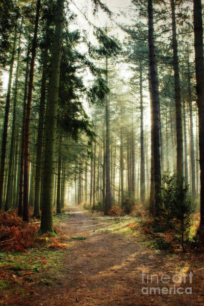 Kings Lynn Wall Art - Photograph - A Walk Through The Pines by John Edwards