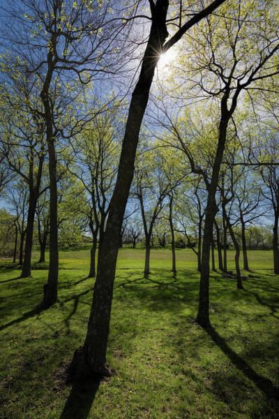 Photograph - A Walk Through The Trees by Scott Bean