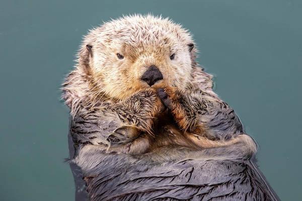 Wall Art - Photograph - A Wet Sea Otter  Enhydra Lutris by Doug Lindstrand