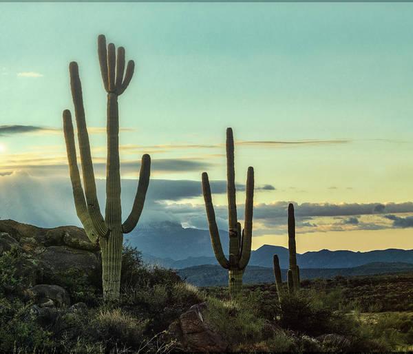 Wall Art - Photograph - A Winter Desert Morning  by Saija Lehtonen