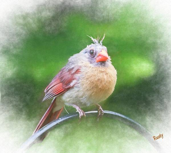 Digital Art - A Young Cardinal Perching On A Rail. by Rusty R Smith