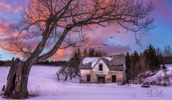 Photograph - Abandoned Homestead by Tracy Munson
