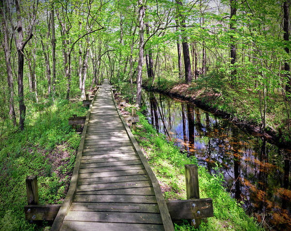 Wall Art - Photograph - Abbott's Mill Nature Center Pano by Brian Wallace