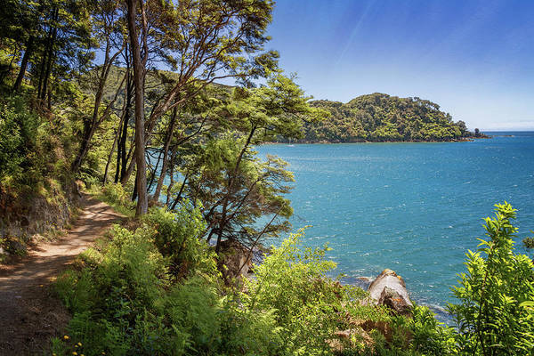 Wall Art - Photograph - Abel Tasman Coastal Trail New Zealand by Joan Carroll