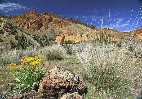 Photograph - Above Juniper Gulch by Ed  Riche