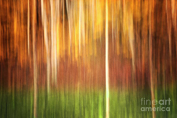Wall Art - Photograph - Abstract Autumn Forest by Priska Wettstein