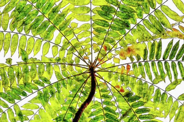 Blooming Tree Drawing - Abstract Beautiful Blooming Watercolor Drawing by Hasan Ahmed