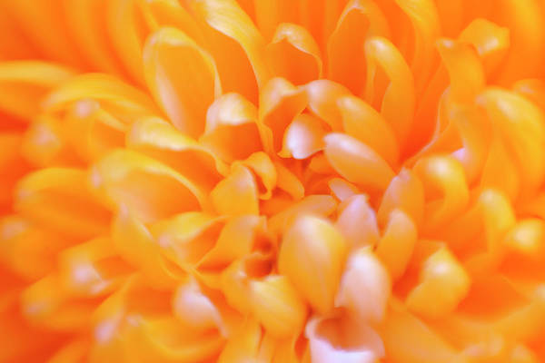 Fragility Photograph - Abstract Defocussed Full Frame Orange by Jpecha
