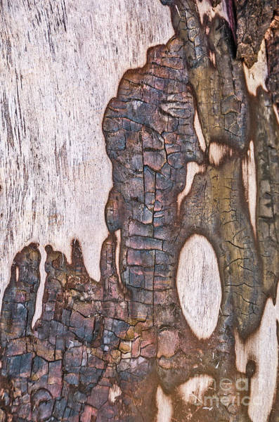 Photograph - Abstract Design On A Tree Trunk by Sue Smith