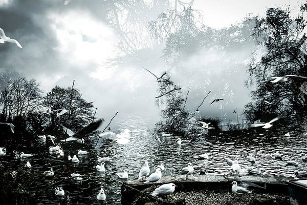 Wall Art - Photograph - Abstract Dreamy Landscape With Birds by David Ridley