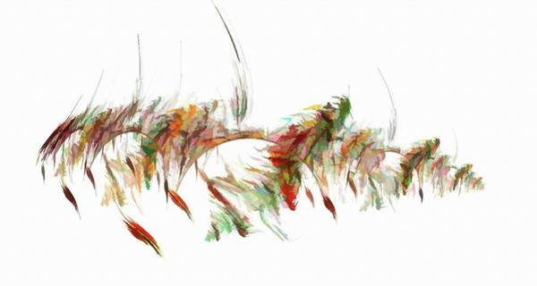 Digital Art - Abstract Feather Multicolor by Don Northup