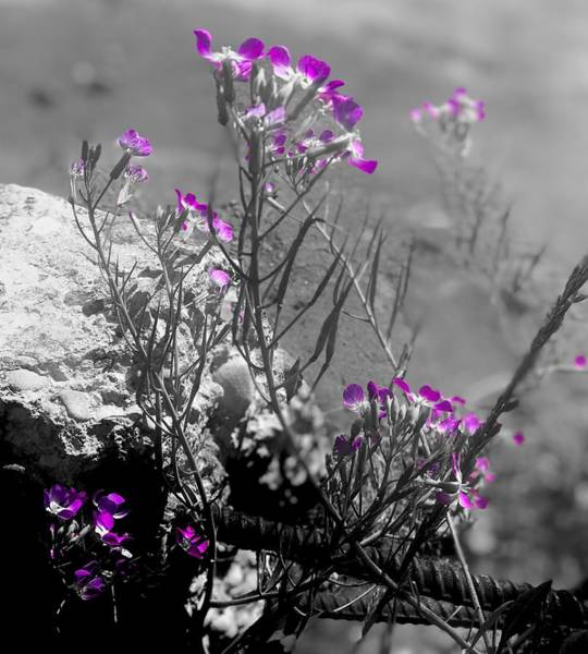 Photograph - Abstract Floral Dreams by Lynda Anne Williams