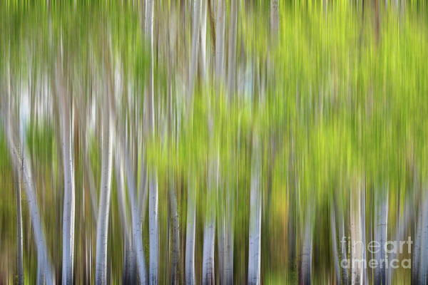 Photograph - Abstract Forest In Motion Blur by James BO Insogna