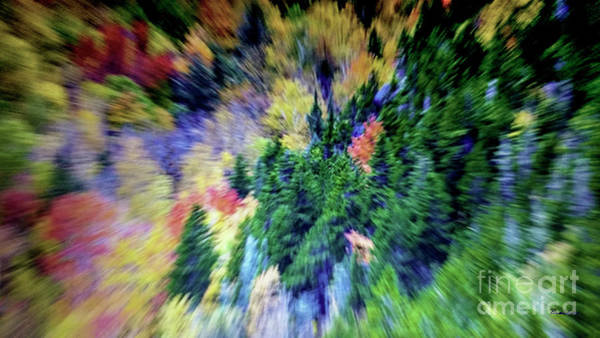Photograph - Abstract Forest Photography 5501d1 by Ricardos Creations