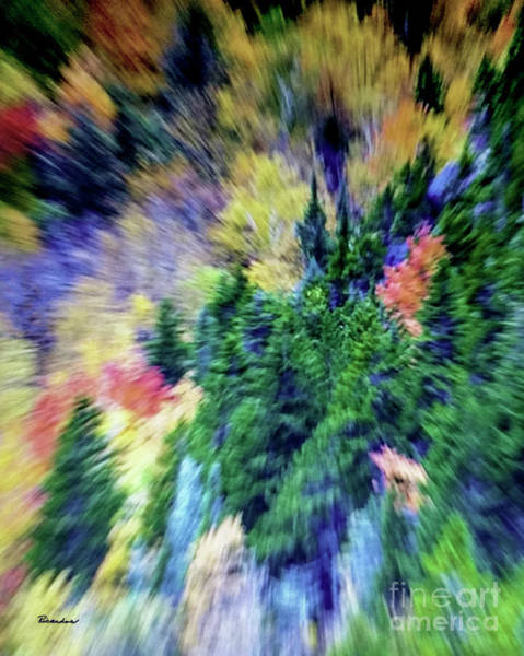 Photograph - Abstract Forest Photography 5501d3 by Ricardos Creations